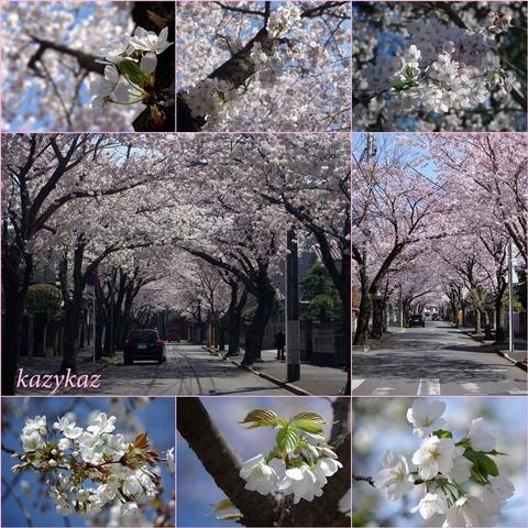 桜コラージュ.jpg